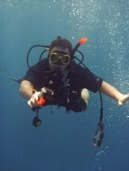 Great Barrier Diving