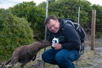Meeting new wild friends in Tasmania